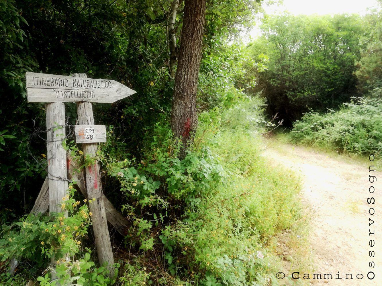 Sentiero del castelluccio Pisciotta, il cilentano.jpg