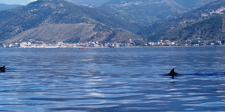 delfini tursiope nel cilento il cilentano pioppi acciaroli avvistamento tursiopi