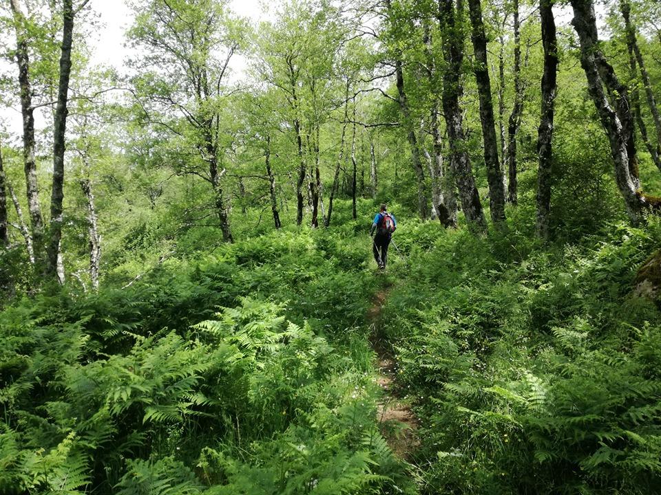 Il sentiero della Primula trekking a Capo Palinuro cilento il cilentano (1)