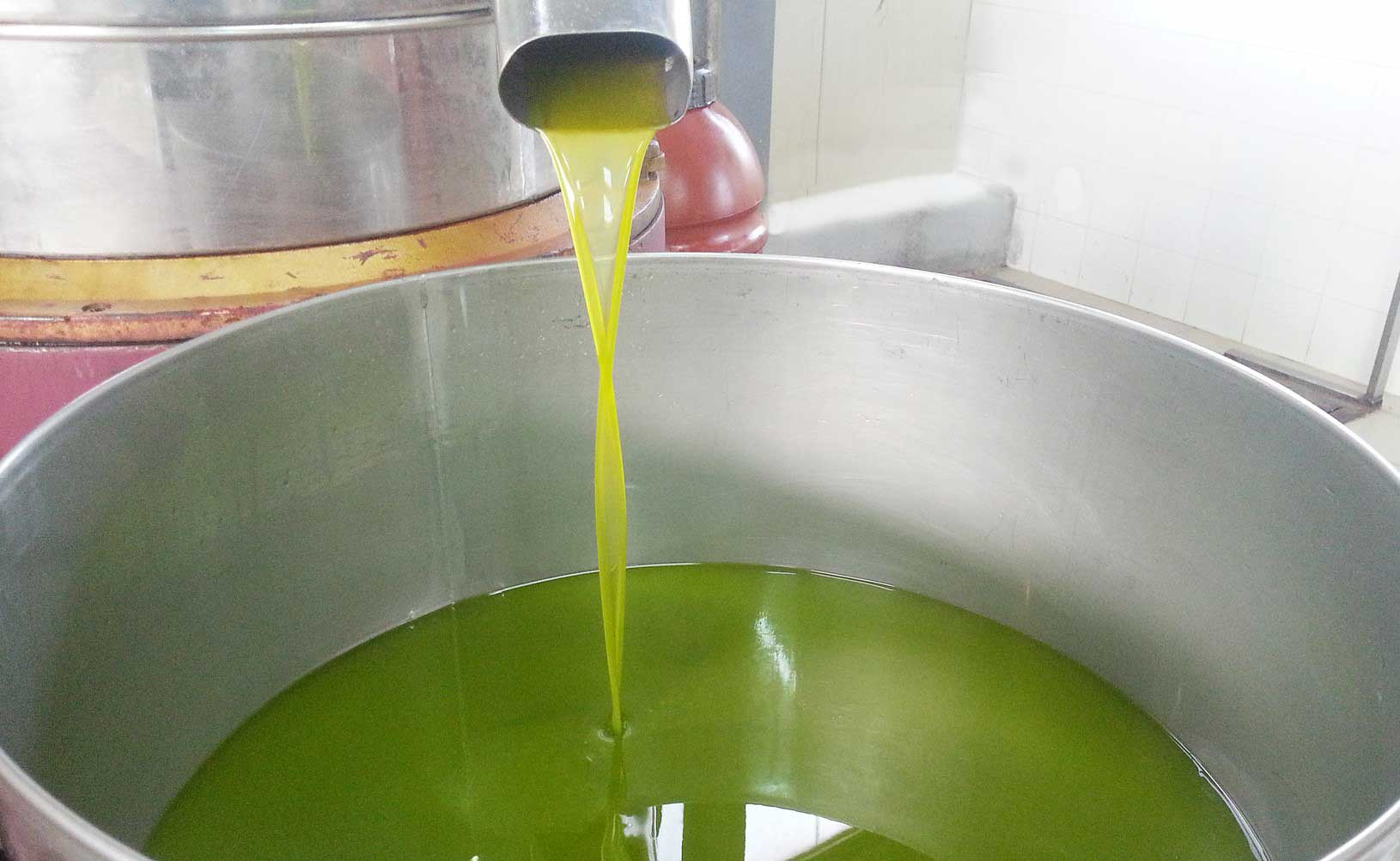 Olio-del-Cilento-evo-extravergine-di-oliva-doc