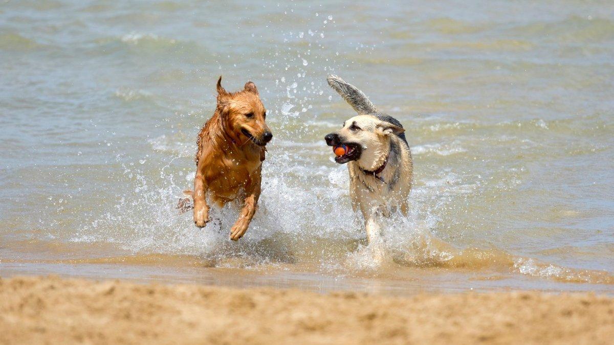 Spiaggia per cani ad AScea Marina